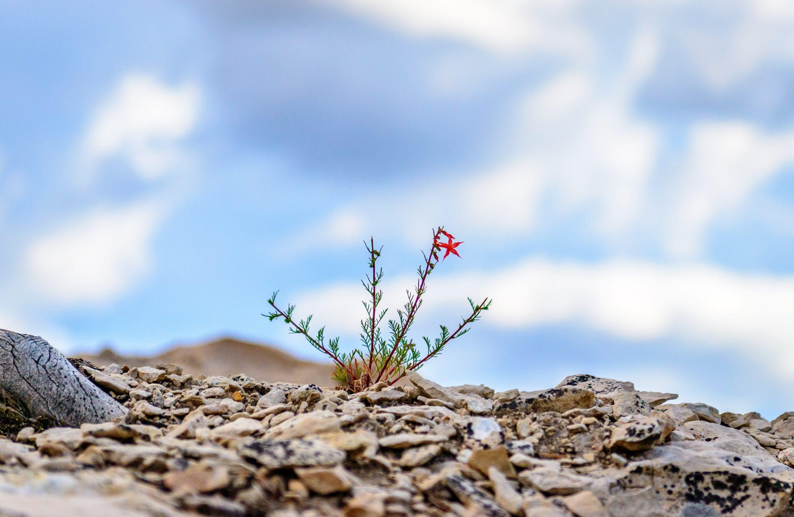 Wytrwałość jest miarą Twojej wiary w siebie i w to co robisz.