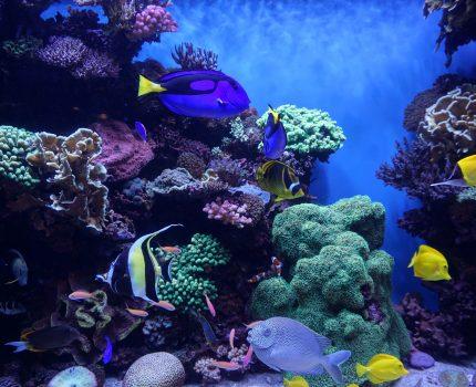 Na początek popływaj w basenie wiedzy i morzu umiejętności, a na koniec zdecyduj się na ocean inspiracji.